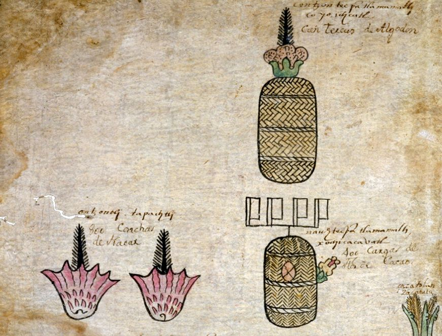 FIGURE 13. Tribute in red spondylus seashells, cacao, and cotton from the province of Ciuatlan (folio 9v).